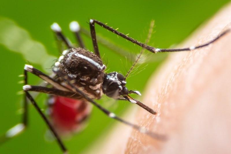 E' iniziata l'estate, diciamo addio alle zanzare