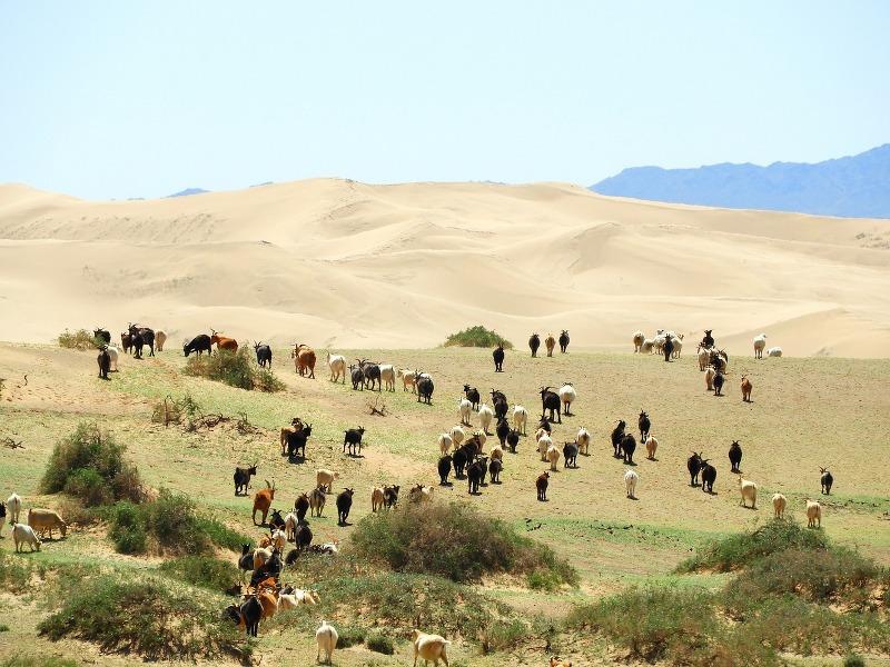 Esplorare gli spazi infiniti della Mongolia con un viaggio fotografico