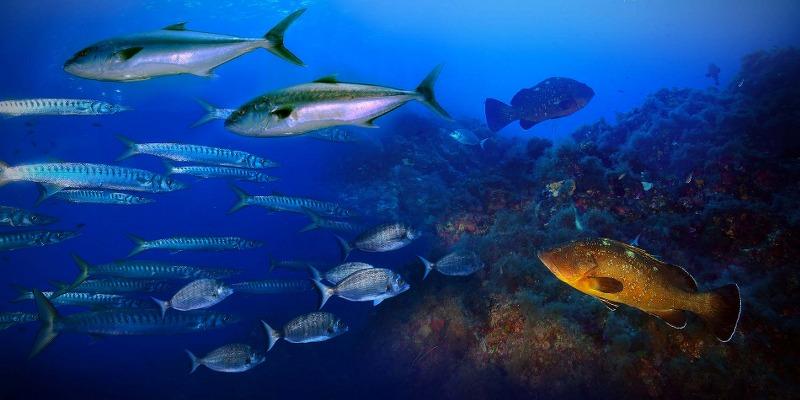 Vacanze a Ustica, nell'isola delle immersioni