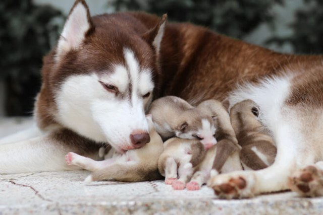 Come svezzare i cuccioli di cane